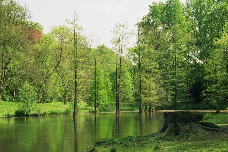 Botanisher Garten Rombergpark dortmund